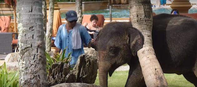 elefantes-maltratados4