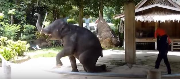 elefantes-maltratados6
