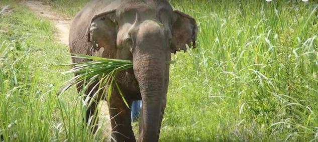elefantes-maltratados9