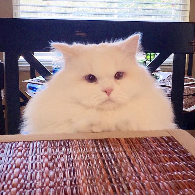 gatito esponjoso rescatado 2
