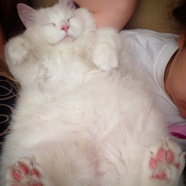 gatito esponjoso rescatado 4