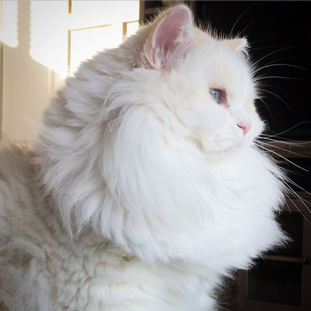 gatito esponjoso rescatado 5