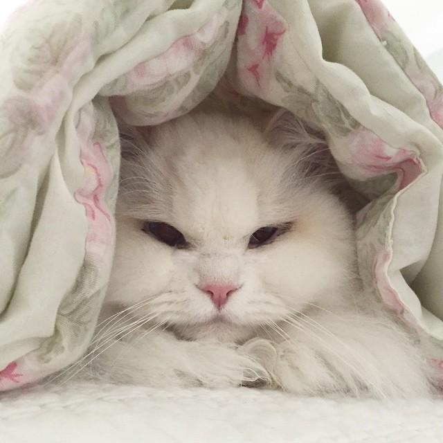 gatito esponjoso rescatado 9