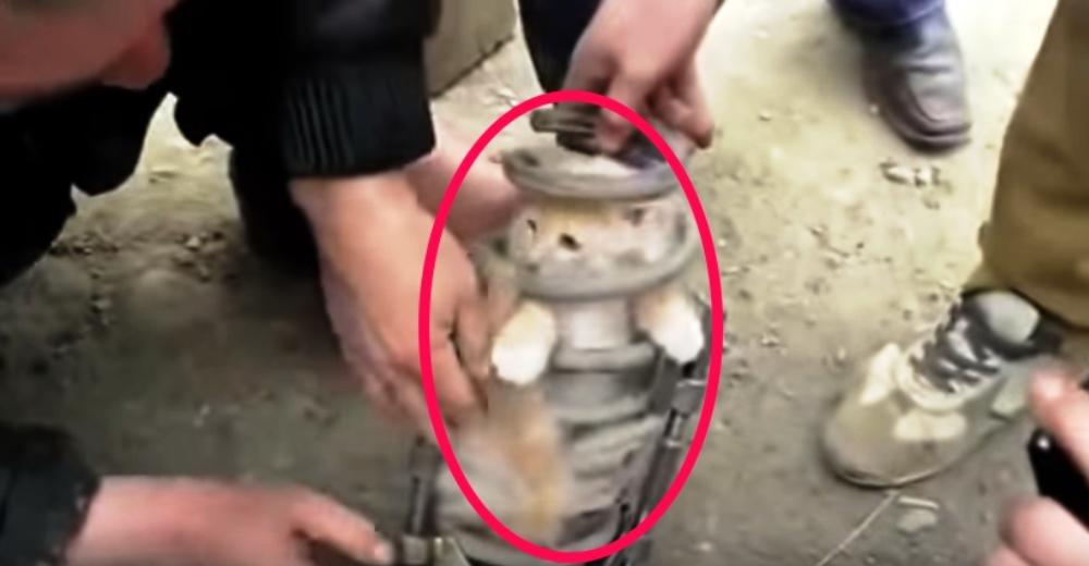 gato-rescatado-suspension-carro