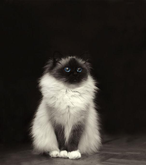 gatos-esponjosos1