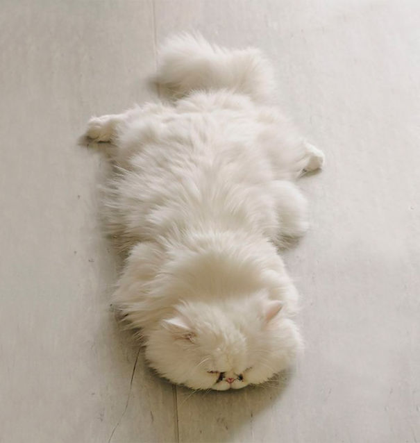 gatos-esponjosos13