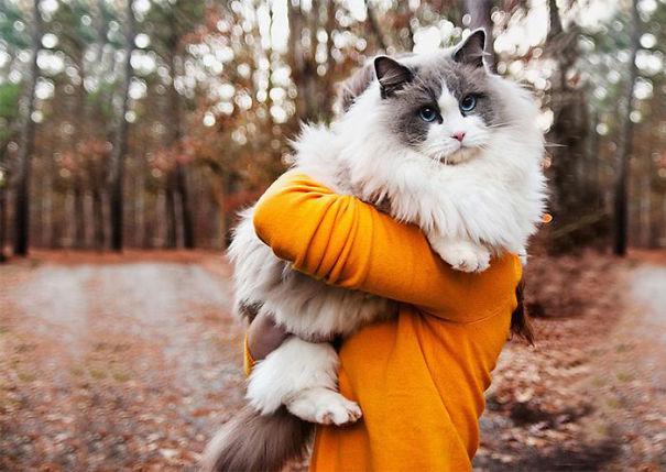gatos-esponjosos14