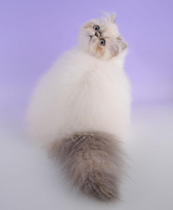gatos-esponjosos15