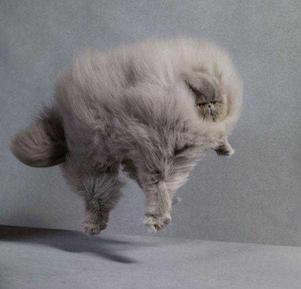 gatos-esponjosos3
