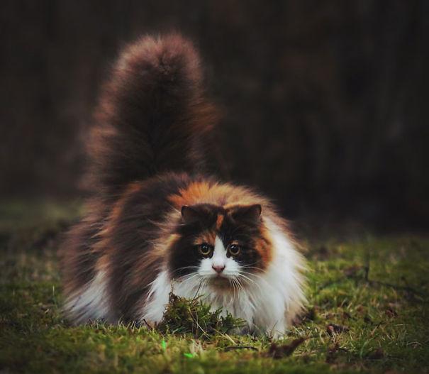 gatos-esponjosos9
