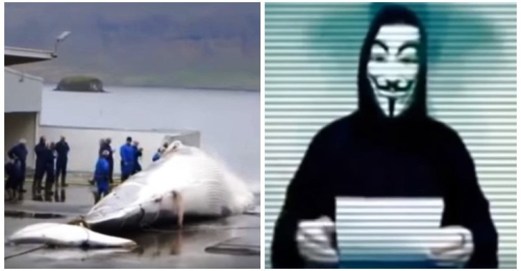 hackers-cierran-paginas-de-cazadores-de-ballenas9