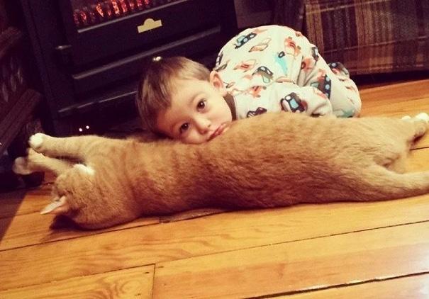 larry el gato guardian 2