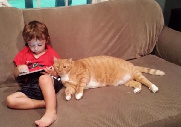 larry el gato guardian 5