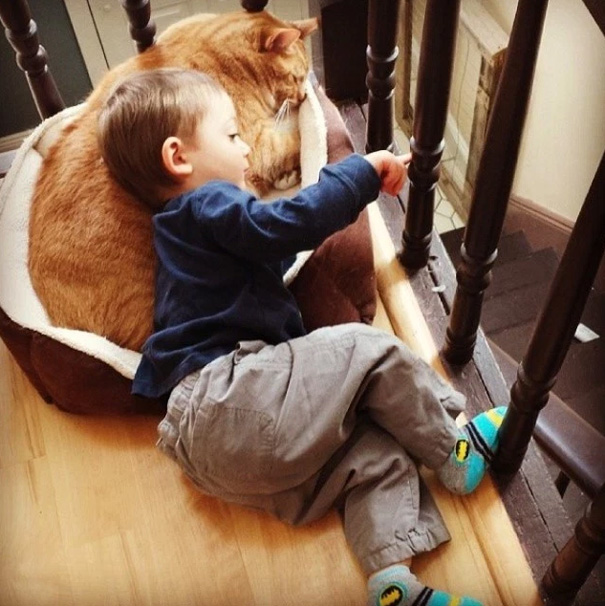 larry el gato guardian 7