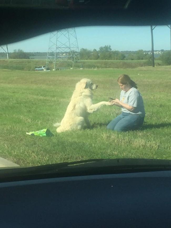 lealtad perro 3