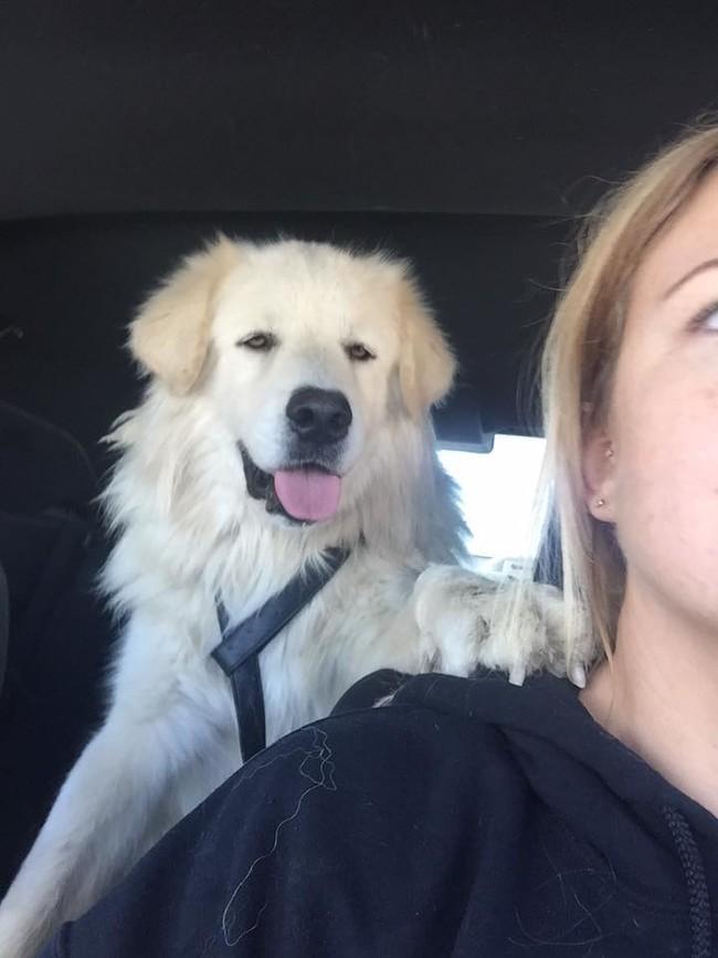 lealtad perro 4