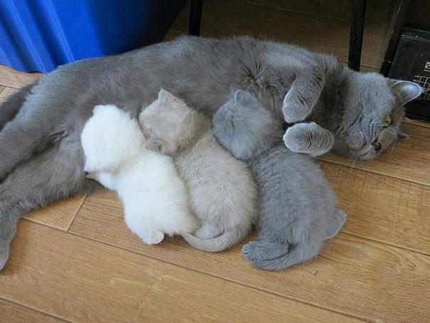 mamas felinas 1