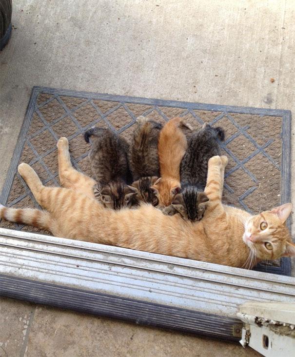 mamas felinas 12