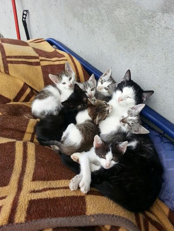 mamas felinas 16