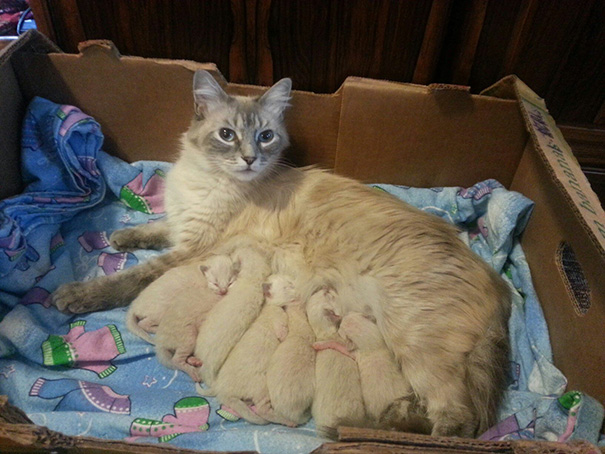 mamas felinas 17
