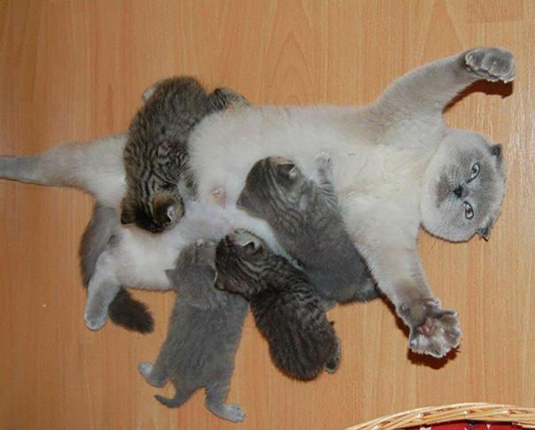 mamas felinas 2
