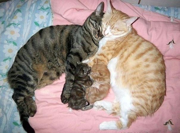 mamas felinas 4