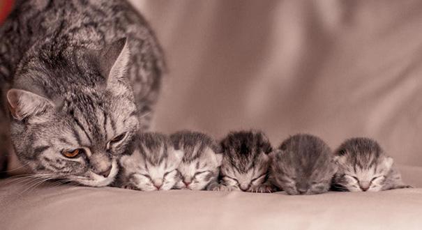 mamas felinas 7