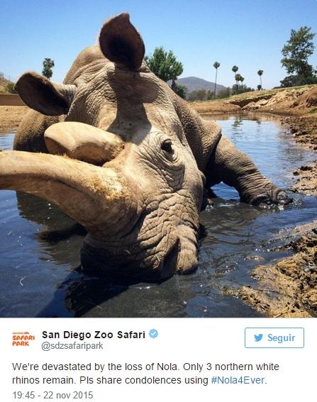 muere-ultimo-rinoceronte-blanco1