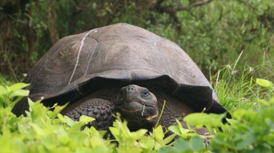 nueva-especie-de-tortuga1