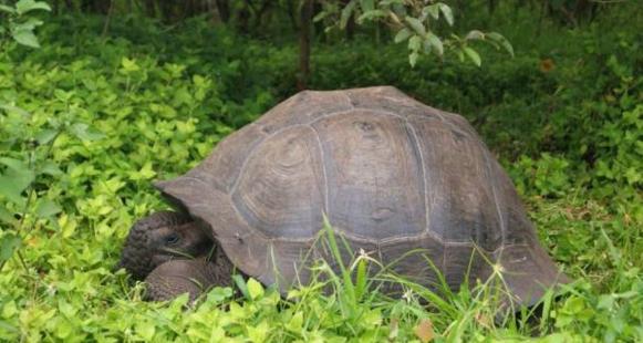 nueva-especie-de-tortuga2