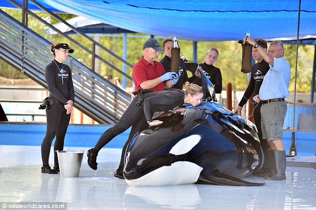 orca-unna