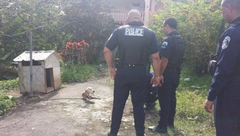 perro-desnutrido-rescate-policia2