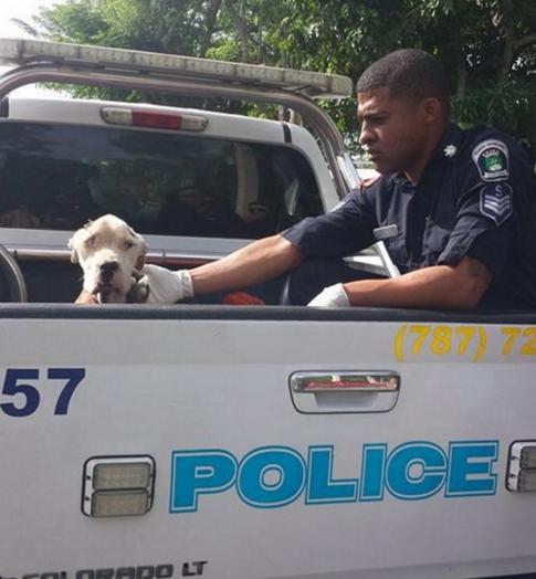 perro-desnutrido-rescate-policia5