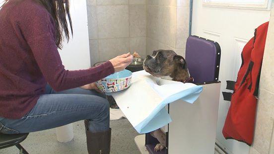 perro-enfermo-esofago-busca-hogar1