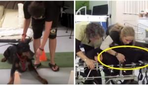 perro-paralisis-camina-de-nuevo17