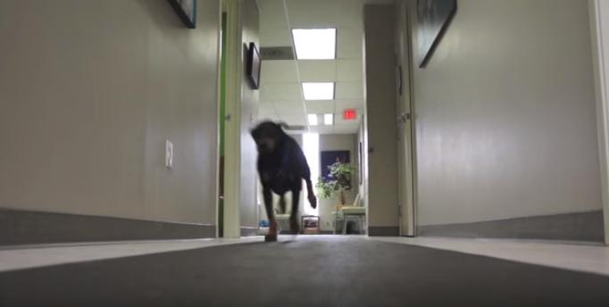 perro-paralisis-camina-de-nuevo2
