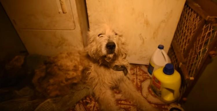 perro-rescatado-levanta-su-pata1