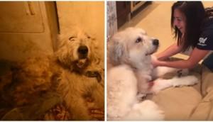 perro-rescatado-levanta-su-pata1 - copia