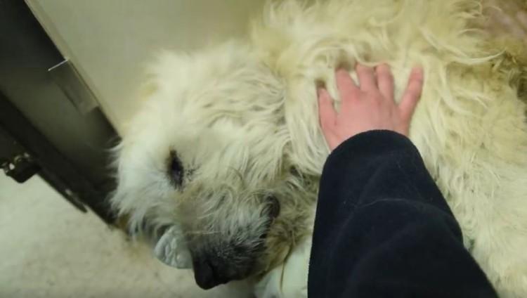 perro-rescatado-levanta-su-pata2