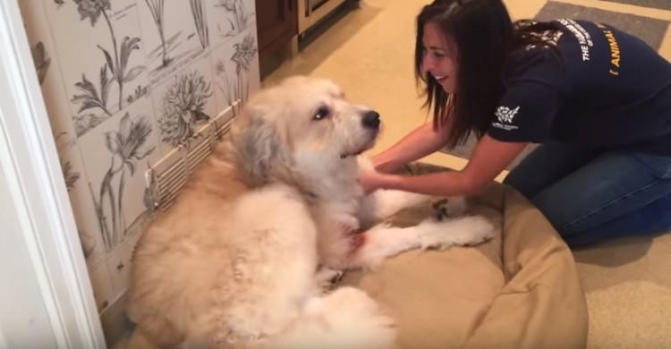 perro-rescatado-levanta-su-pata7