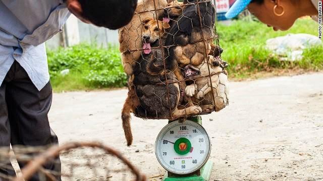 perros-china