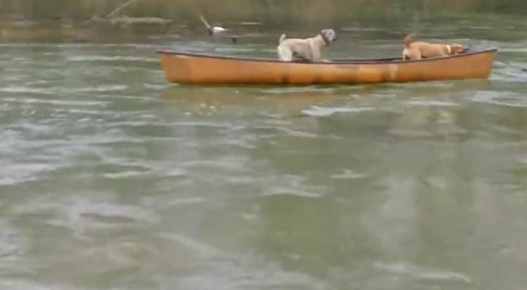 perros-rescatados-canoa2