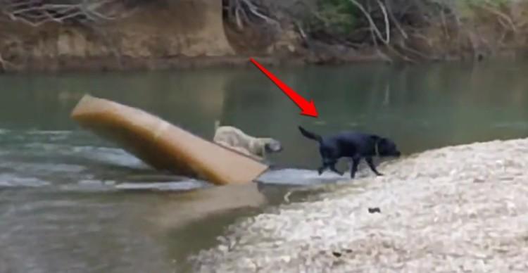 perros-rescatados-canoa4
