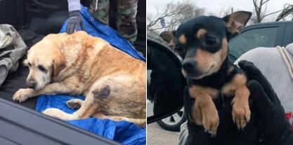 perros-tornado-rescate