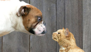 perros-vs-gatos-convivencia-video