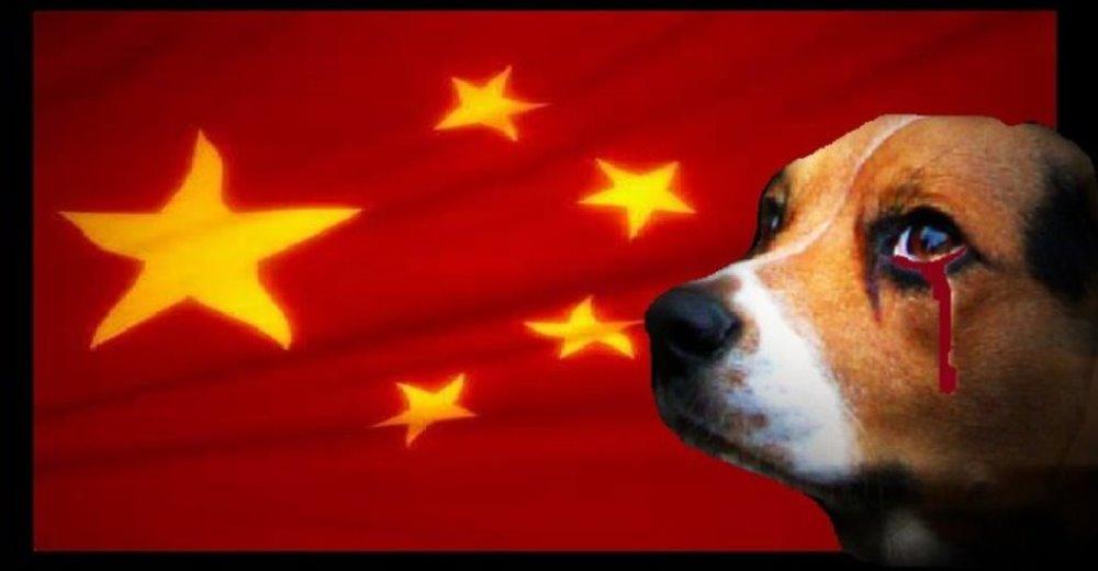 peticion-contra-festival-de-carne-de-perros-china1 - copia