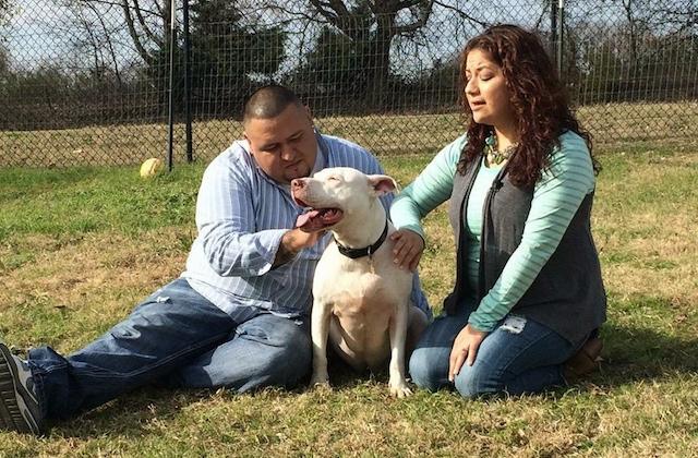 pitbull-adoptado-despues-de-esperar-mil-dias2