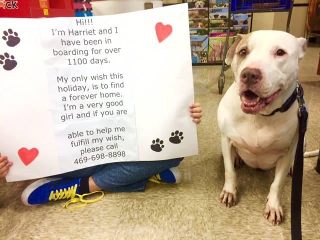 pitbull-adoptado-despues-de-esperar-mil-dias3