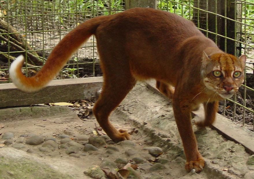 raros gatos salvajes 13