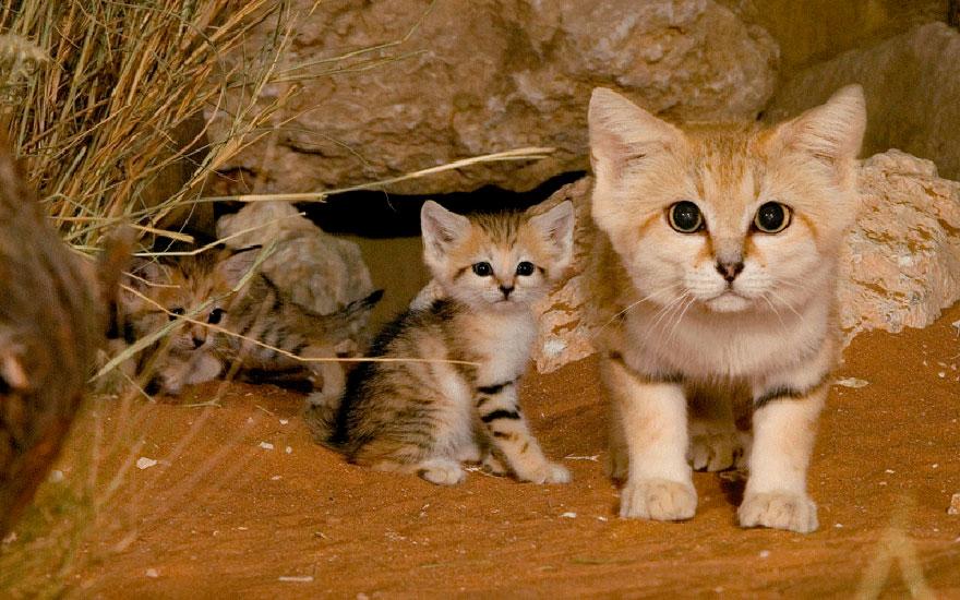 raros gatos salvajes 2
